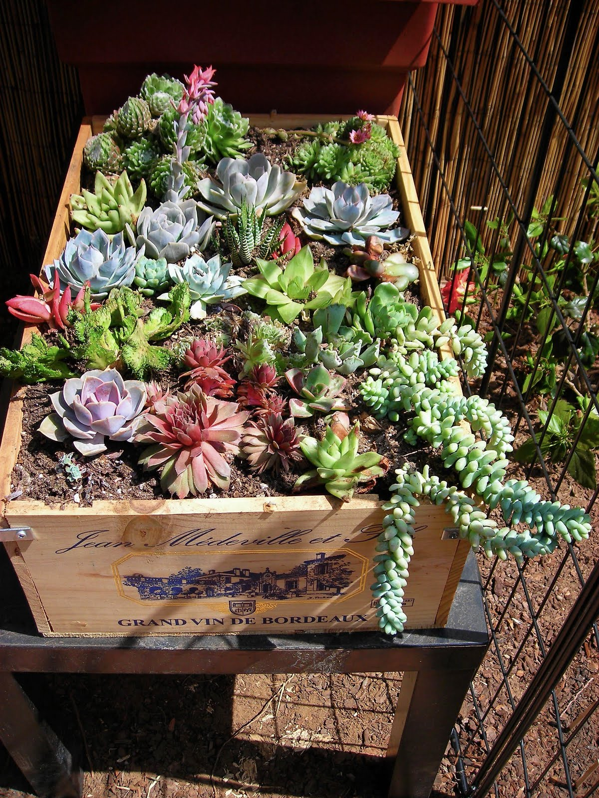 Garden-succulent-in-a-wine-crate
